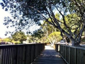 Tam Valley Bike Path Sally_K