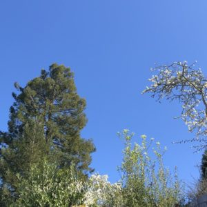 blue sky and trees