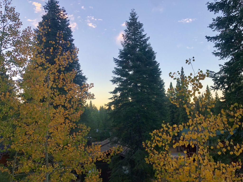 aspen and redwood trees in lake tahoe